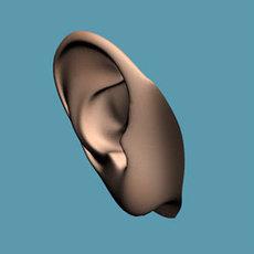 ear 3D Model