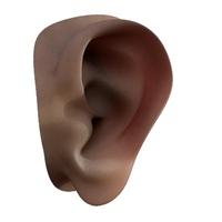 A sweet ear human anatomy 3D Model