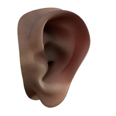 A sweet ear human anatomy 3D Model