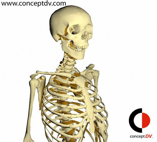 Full Human Skeleton 3D Model