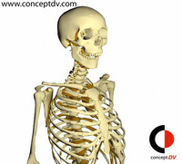Full Human Skeleton 3D Model