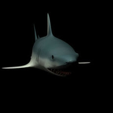 Shark - animated 3D Model