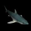 23 48 59 187 shark2 4