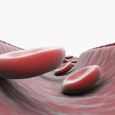artery cut section 3D Model
