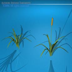 Pond plant 3D Model