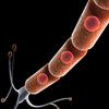 00 01 58 692 neurone17 4