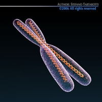 Chromosome with DNA 3D Model