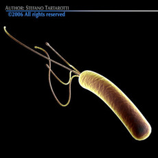 Helicobacter pylori bacteria 3D Model