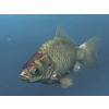 00 06 16 796 goldfish1 4
