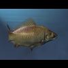 00 06 17 24 goldfish5 4