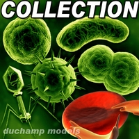 HQ cell collection 3D Model