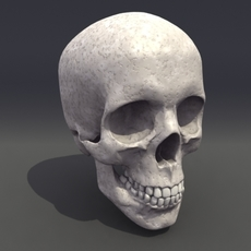 Skull_Human-Biomedical 3D model 3D Model