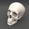 00 23 04 149 skull rot 03 4