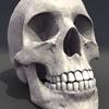 00 23 04 234 skull rot 05 4