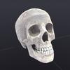 00 23 04 277 skull wire 01 4