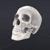 00 23 04 310 skull wire 02 4