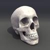 00 23 04 90 skull rot 01 4