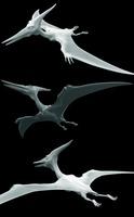 Pteranodon v2 3D Model