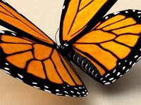 Monarch 3D Model