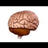00 34 55 364 brain02 4