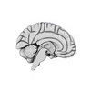 00 34 56 402 brain14 4