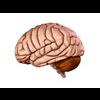 00 34 56 57 brain11 4