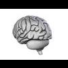 00 34 56 586 brain16 4