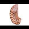 00 34 56 950 brain20 4