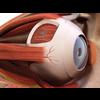 00 36 58 625 eye detail 5 4