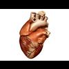 00 37 43 632 heart 01 4