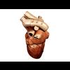 00 37 43 874 heart 03 4