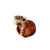 00 37 47 838 heart 18 4