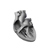 00 37 48 944 heart 23 4
