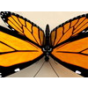 00 39 21 44 monarch 4 4