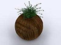 Decoration plant 3D Model