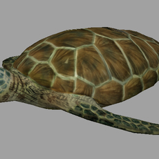 realistic turtle 3D Model