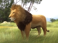 Free Lion 3D Model