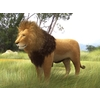 00 43 52 739 lion model created with 3ds max 4