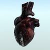 00 44 31 493 heart cam fr75 01 wf 4