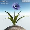 00 46 13 11 flower 003 main 4