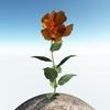 00 46 13 289 flower 009 main 4