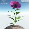 00 47 41 719 flower 025 main 4