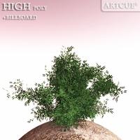 shrub 001 3D Model