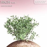 shrub 002 3D Model