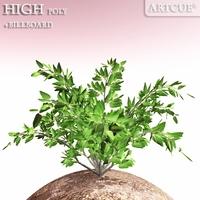 shrub 004 3D Model