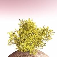 shrub 007 3D Model