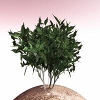 shrub 008 3D Model