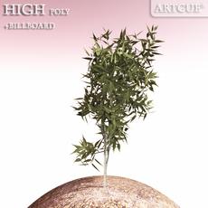 shrub 005 3D Model