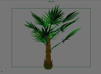 Free Windmill Palm Tree with full animation control 3D Model