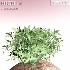 shrub 011 3D Model